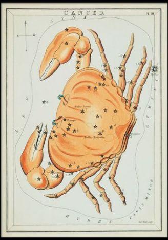Plakat znaki zodiaku retro - Rak