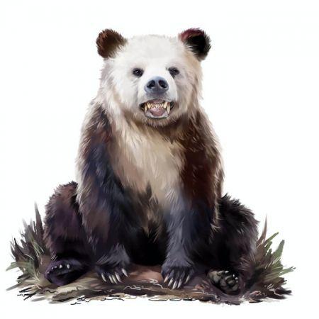 typ osobowości, sen, niedźwiedź