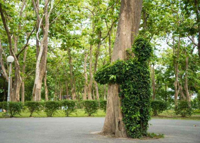 data/articles/przytulanie drzew, przytulanie do drzew, przytulanie się do drzew, energia drzew