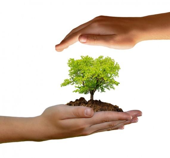 Doładuj się energią drzew!