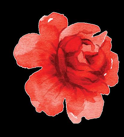 Róża - magia, miłość i moc kolorów