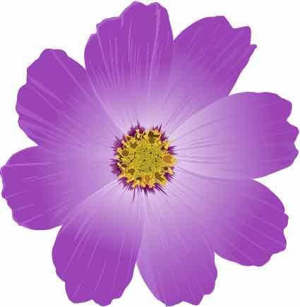 fiołek, bratek, kwiat