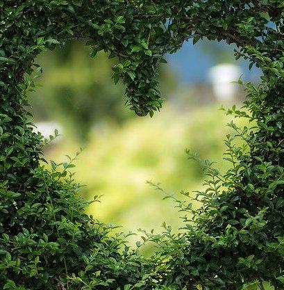 serce z roślin