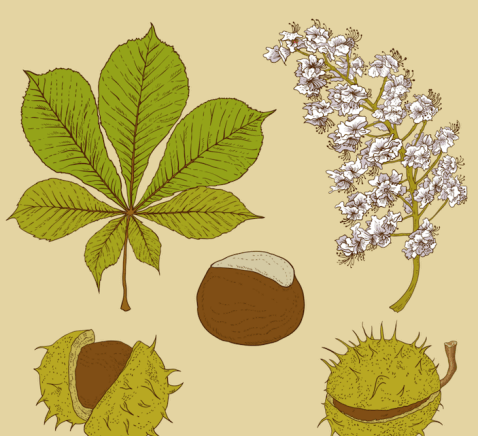 kasztany