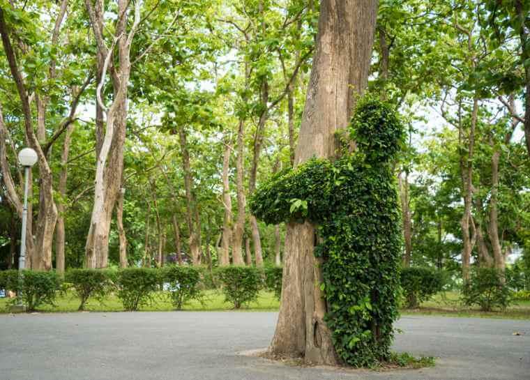 przytulanie drzew, przytulanie do drzew, przytulanie się do drzew, energia drzew