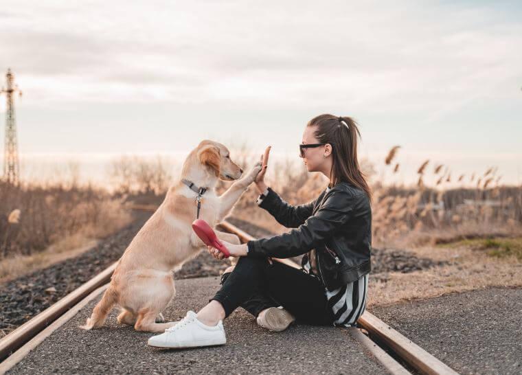 jaki pies pasuje do twojego znaku zodiaku, rasa psa a znak zodiaku