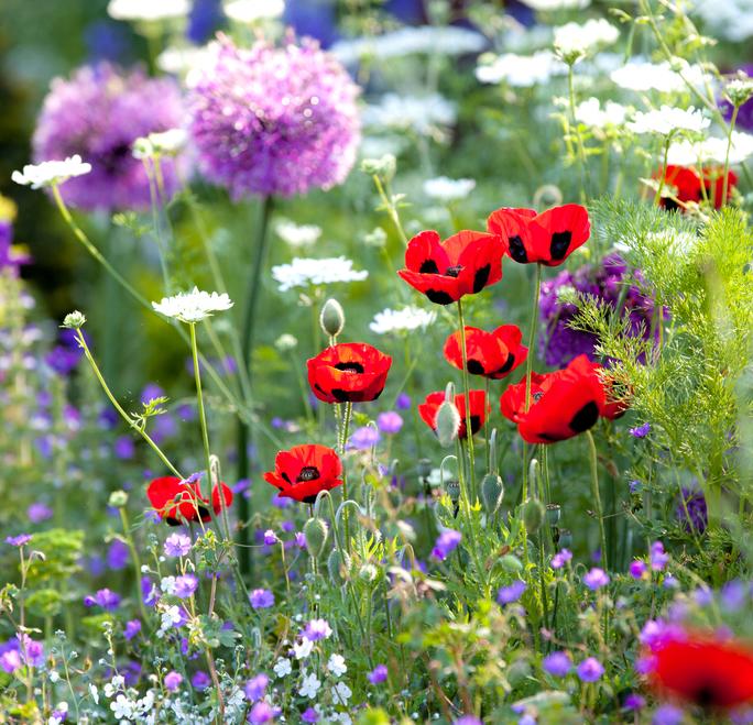 Zrób amulet z kwiatów. Na szczęście, miłość i zdrowie.