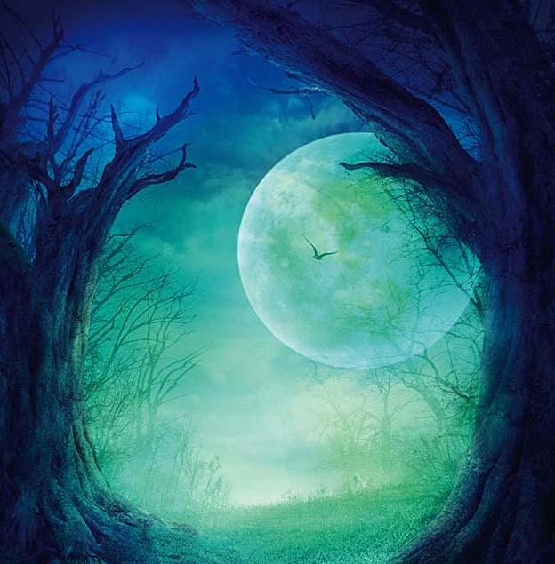 księżyc w pełni, drzewa