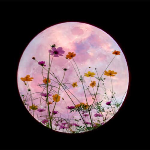księżyc w pełni, kwiaty