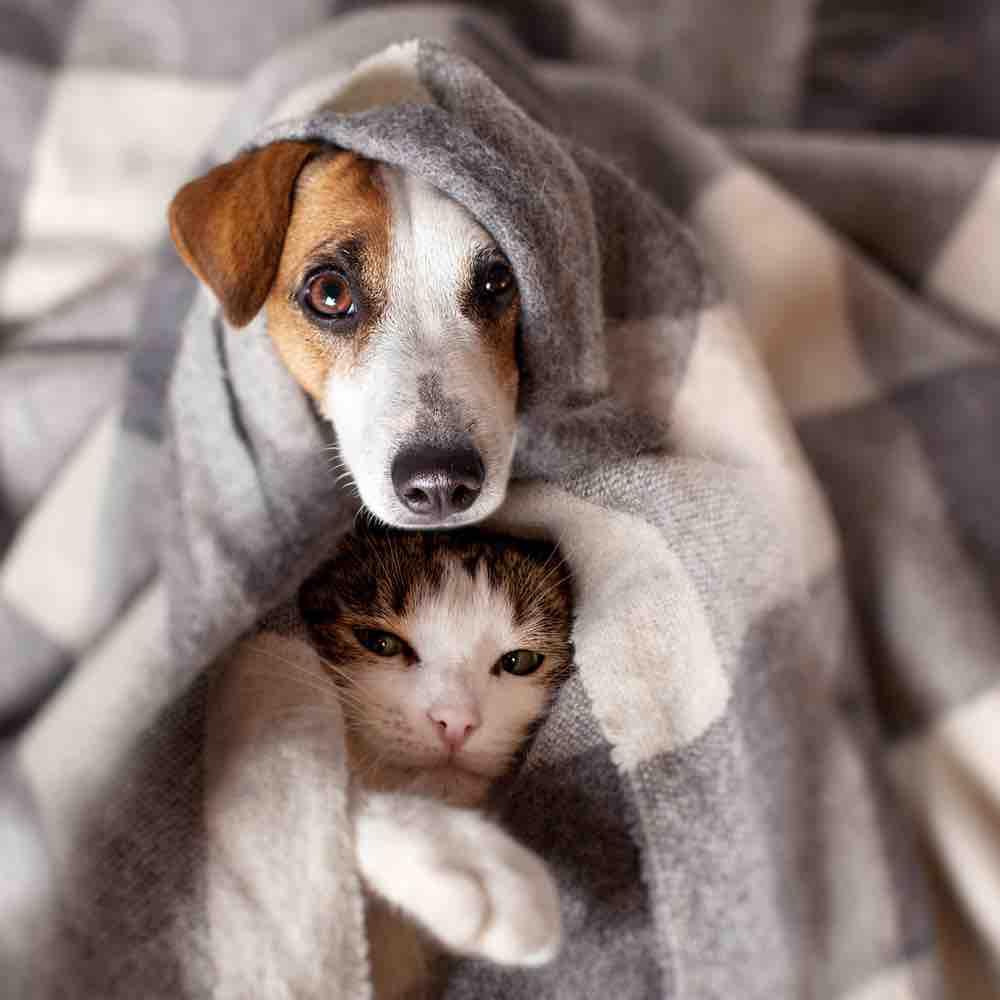 Chcesz mieć szczęśliwy dom? Otwórz jego drzwi zwierzętom.