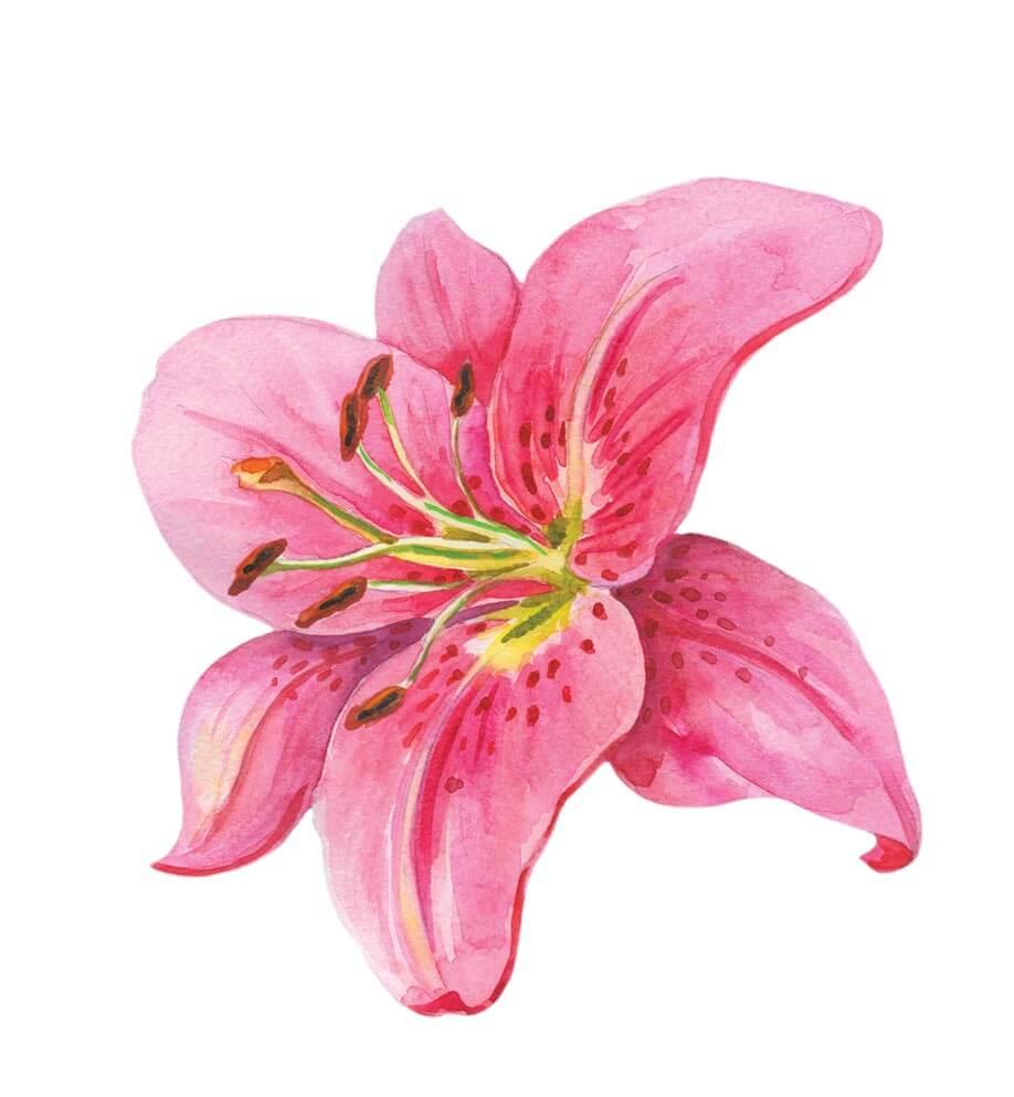 Lilia to piękny kwiat, który przynosi miłość i zapewnia bezpieczeństwo